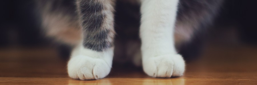 flooring_for_pet_owners